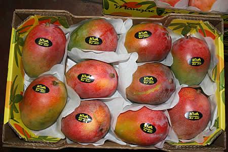 Israel: mango export season starting this week-21food com