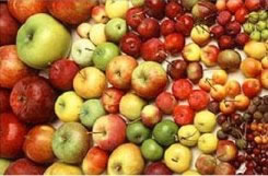 Green Apple Varieties http://www.freshplaza.com/news_detail.asp?id=7344