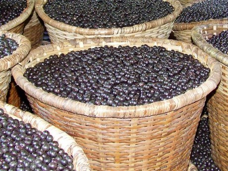 Brazil acai by product to give healthy boost to energy