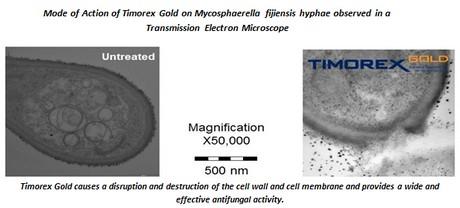 Timorex Gold mostrado bajo un microscopio electrónico de transmisión ...