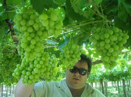 Ancora buona la domanda di uva da tavola argentina in gran - Red globe uva da tavola ...