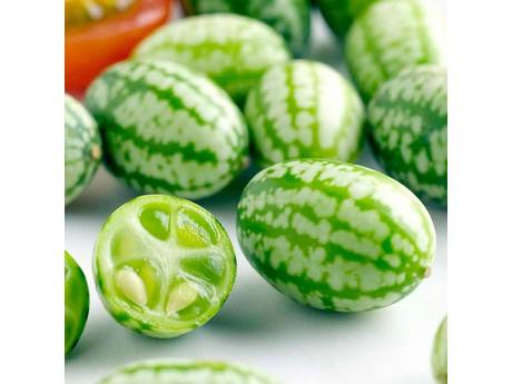 Mexicaanse mini komkommer verovert verenigd koninkrijk - De komkommers ...