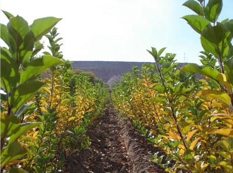 Asesoramiento laboral fruticultura empaque producci n for Viveros en neuquen