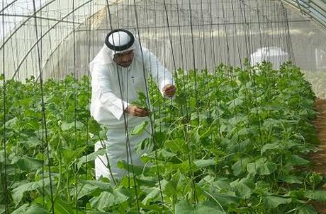 Ministry report shows: organic farming on the rise in UAE