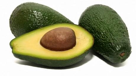 is an avocado a fruit or vegetable exotica rare fruit nursery