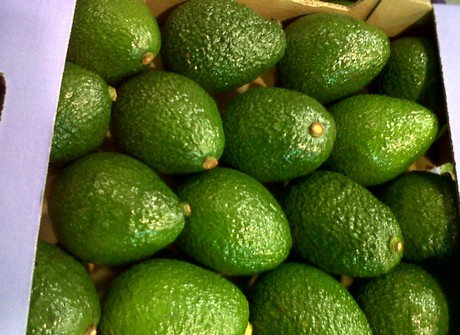 FreshPlaza com : Kenyan avocados can compete with traditional suppliers