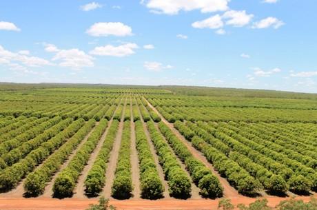 australia nt mango season starts strong for manbulloo