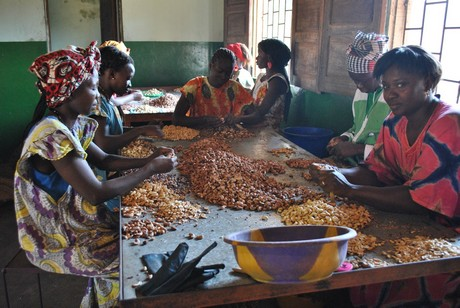 Guinea Bissau is world's fourth-largest producer of cashew ...