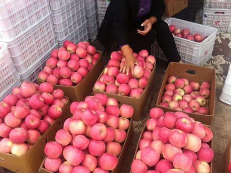 детскими как выращивают яблоки в китае романы, Современные