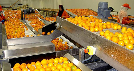 Marseille back in the game for exotic fruit imports