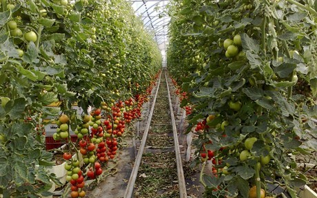Conflict over Swiss vegetables