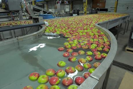 Ontario Apple Production Down 50 Percent