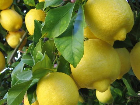 India: Higher lemon prices due to greater demand