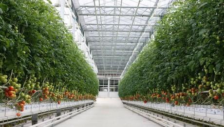 Citronex continues developing in Polish tomato market