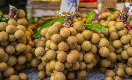Vietnamese longan fruit entering peak season
