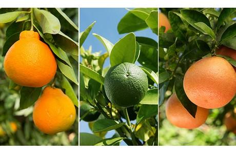 wonderful citrus klaar voor uitbreiding naar europa