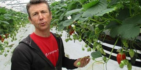 erdbeererzeuger in niedersachsen