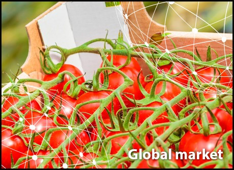 A global look at greehouse tomato prices