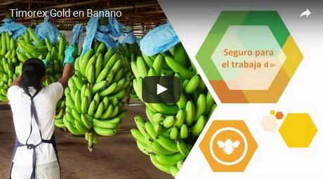 Almacen de bananas y banana para la nena - 3 part 10