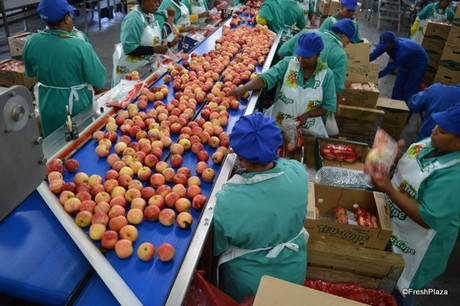 Image result for African fruit producers, exporters
