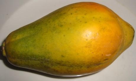 hoe groeit papaya