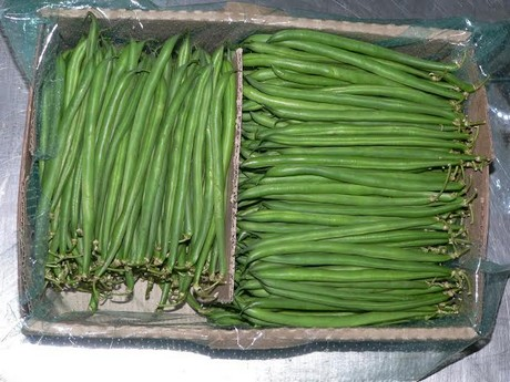 Green bean farmers in Kenya continue to lose ground in EU market