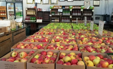 Irish Apple Production Up 100 This Season