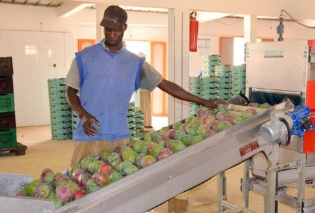 Senegal: Export potential of organic mangoes to the EU
