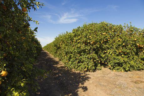 wonderful citrus���������������