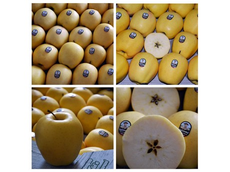 New markets opening up for Ukrainian apples