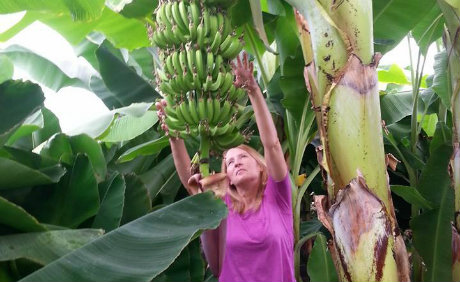 National Business Group On Health >> Bananas and other tropical fruit growing in Ontario, Canada
