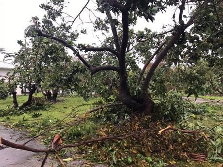 Florida produce industry assesses the damage of hurricane Irma
