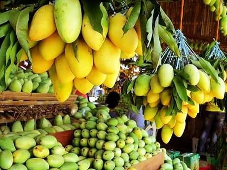 Uphill battle for Philippine mango exporters
