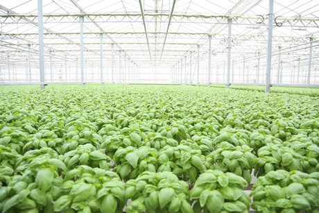 us herb growers survived busiest time of the year