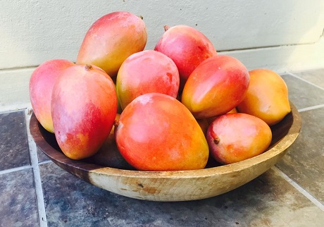 New South African Mango Season In An Off Cycle