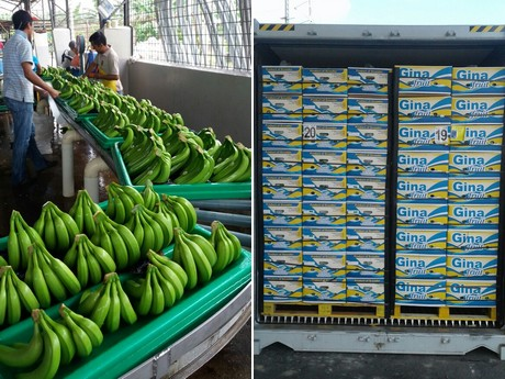 """The banana market is expecting a perfect storm"""""""