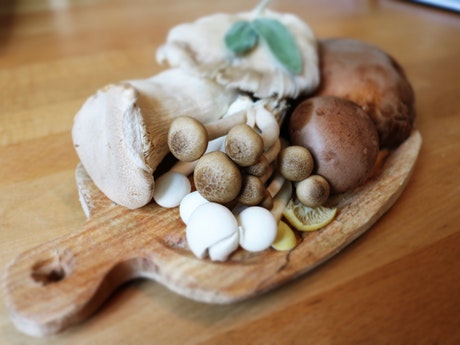 Mushrooms Are Increasingly Popular Protein Source For Blenditarianism