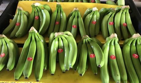U S  imports thin on bananas
