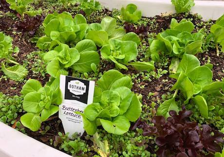 the demand for gotham greens far exceeds supply
