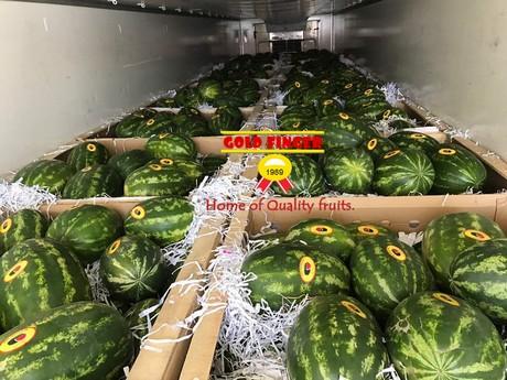 Turkish watermelon season about to start