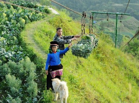 Cargo cableways boost cultivation in southwest China's