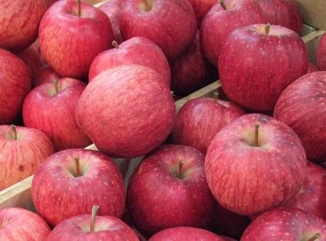 世界一苹果