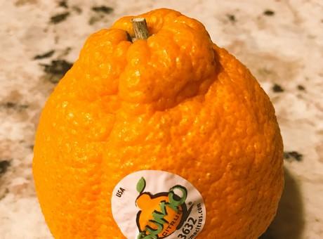 Dekopon柑橘