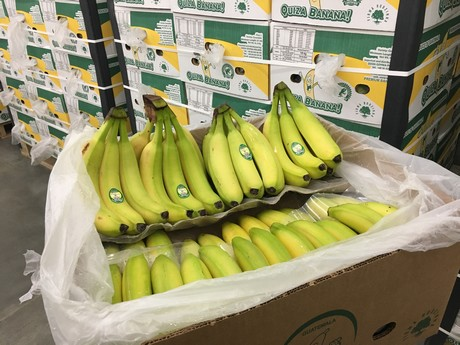 Polish banana prices dropped by 50% over last 4 weeks