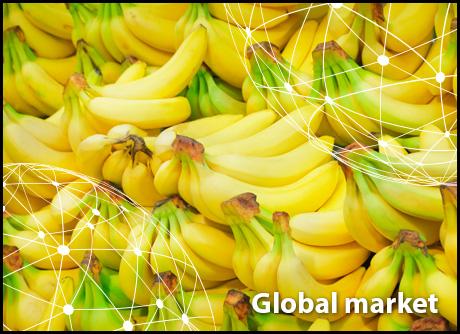 OVERVIEW GLOBAL BANANA MARKET
