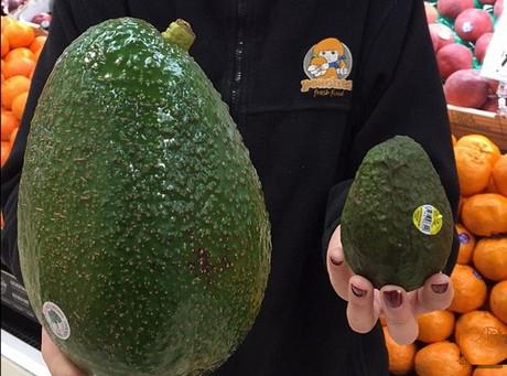 Giant Australian avocados