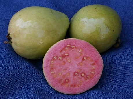 Flat juice market stymies guava producers