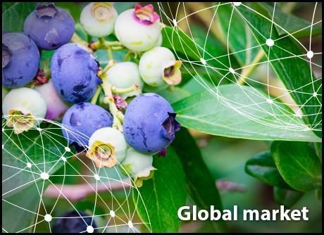 Freshplaza Global Fresh Produce And Banana News