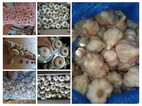 "Egypt: ""Create proper competition in the garlic and onion"